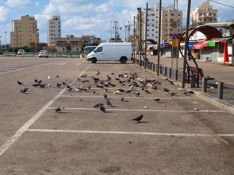 Израиль 01.2012