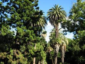 Лиссабон, Ботанический Сад