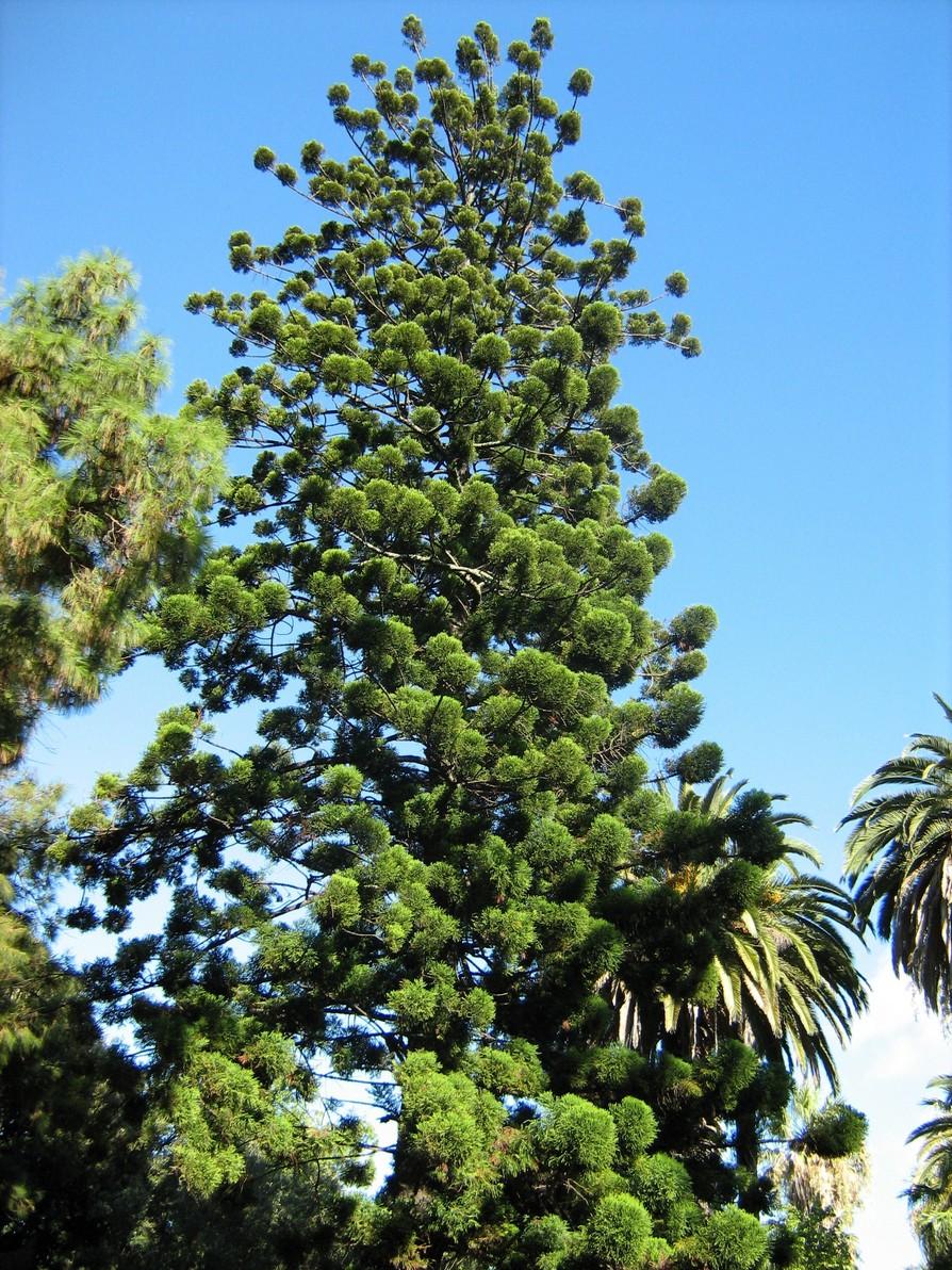 Что посмотреть в Тропическом ботаническом саду ...   1192x894