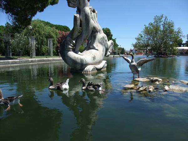 Лиссабон, птицы в Парке Эдуарда VII