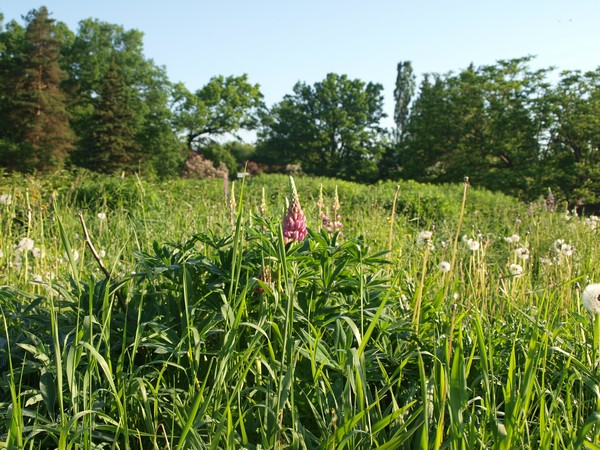 Ботанический Сад, июнь 2011, часть первая