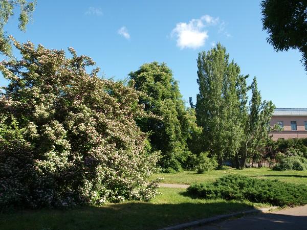 Главный Ботанический Сад РАН 4.06.2011