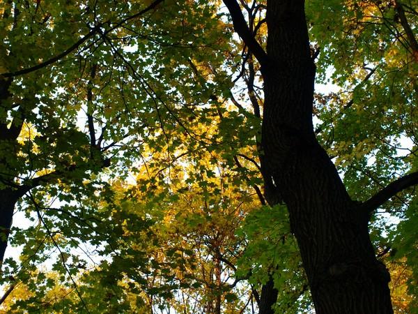 Ботанический Сад. Деревья недалеко от Сада Непрерывного Цветения