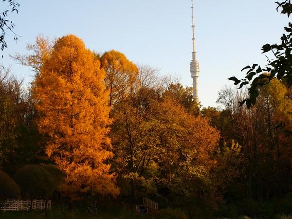 Ботанический Сад. Пруд, пихта и Останкинская Башня