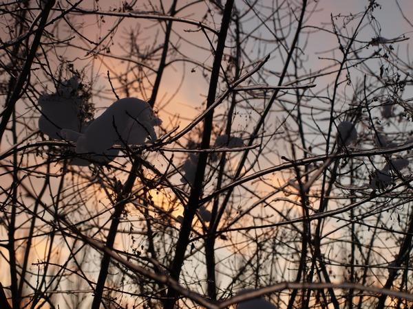 Ботанический Сад РАН. 7 января 2011