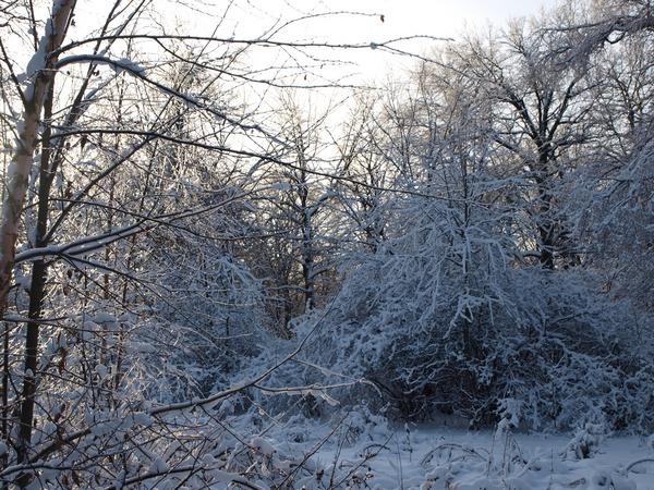 Ботанический Сад РАН.  7 января 2011.
