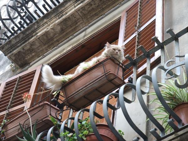 Кошка на улице в Сиракузах. Нахально позирует проходящим под балконом туристам. Не очень люблю я кошек, но тут приходится сделать исключение.