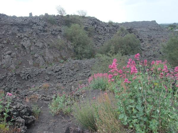 Цветы на склоне Этны.