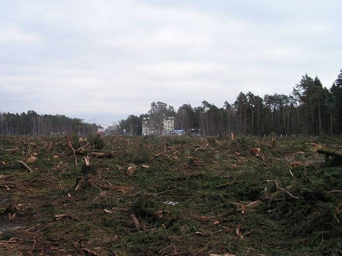 Жуковский цаговский лес вырубка просека