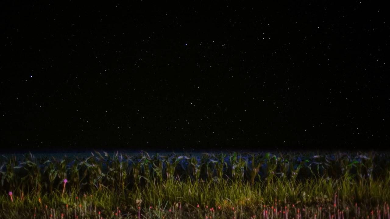 Dedalus кукурузное поле Айова ночь